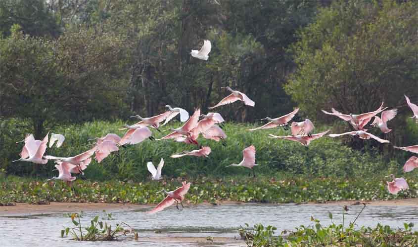 Projeto Bichos do Pantanal tem resultados apresentados em artigo científico
